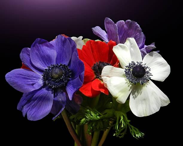 Anemonen bouquet