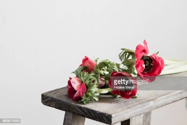 anemones on a table