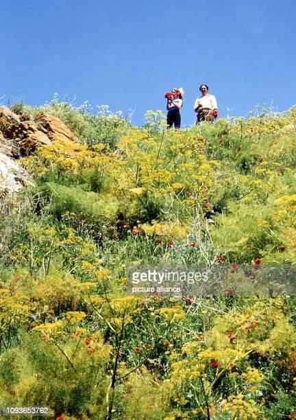 Anfang Juli stehen alle möglichen Wildblumen am Sewansee in voller Blüte aufgenommen im Juli 1976 Der See ist eine wichtige Touristenattraktion für...