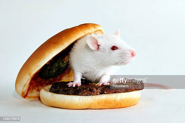 angebraten, bread roll, barbecue, animals, alfred