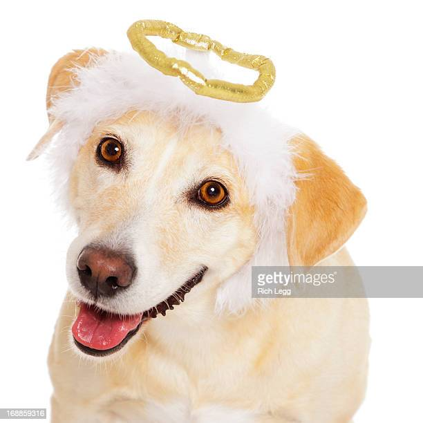 angel dog - angel halo stock pictures, royalty-free photos & images