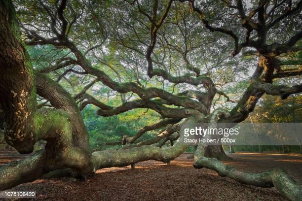 Angel Oak.