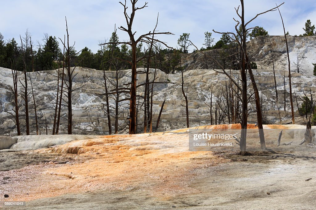 Angel Terrace, Mammoth Hot Springs : Stock Photo
