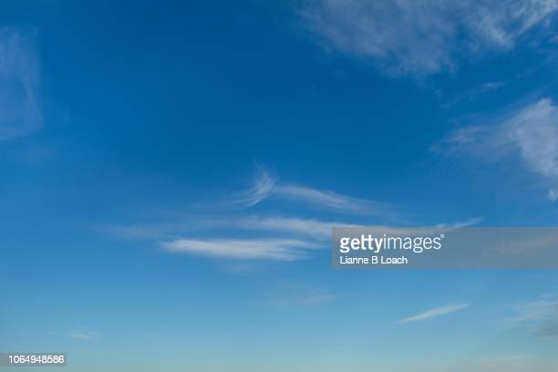 angel wing - lianne loach stock pictures, royalty-free photos & images