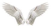 Angel wings, Natural plumage wing