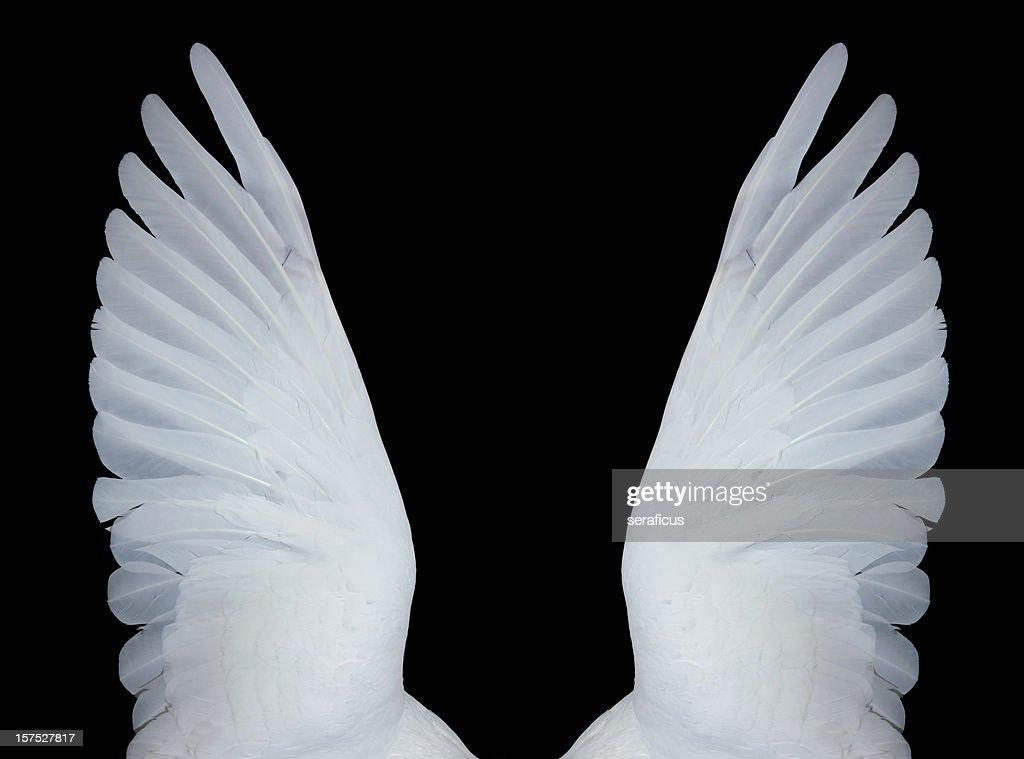 Asas de anjo, XXXL : Foto de stock