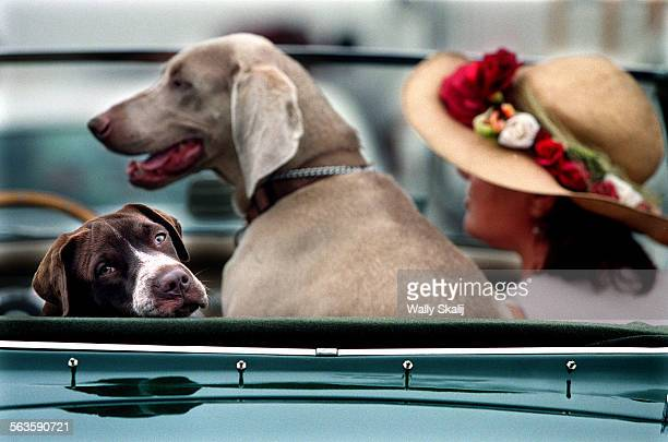 Angela Adam of San Pedro sits in a 1961 Austin Healey with her dogs Biscuit left and Blue at a celebration for Harry Bridges in San Pedro Saturday