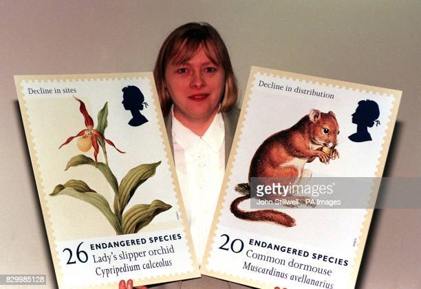 Angela Eagle Under Secretary of State at the Department of Environment and Transport holds up enlarged versions of stamps depicting the Lady's...