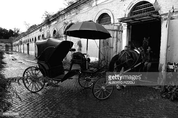 Angelo Sed president of the Romans horsedrawn carriage drivers and his horse Inventore arrive at the stable after a day of work on October 2 2014 in...
