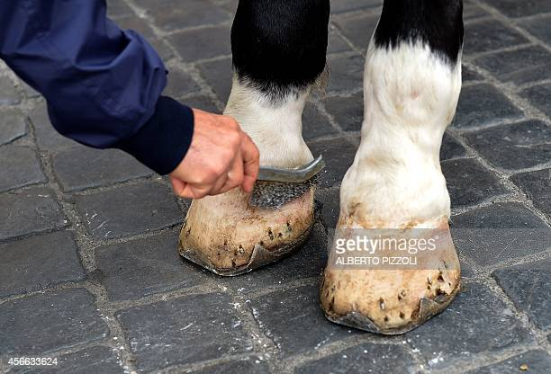 Angelo Sed president of the Romans horsedrawn carriage drivers cleans the hoof of his horse as he waits for clients at Piazza di Spagna on October 2...