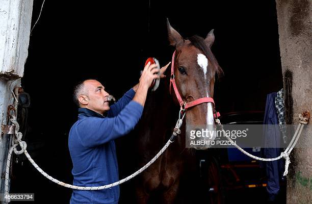 PALASCIANO Angelo Sed president of the Romans horsedrawn carriage drivers prepares his horse 'Inventore' before a day of work on October 2 2014 in...