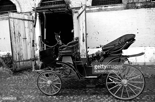 Angelo Sed president of the Romans horsedrawn carriage drivers prepares his horse Inventore before a day of work on October 2 2014 in Rome The...