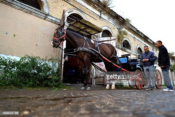 Angelo Sed president of the Romans horsedrawn carriage drivers stands next to his horse Inventore before a day of work on October 2 2014 in Rome The...