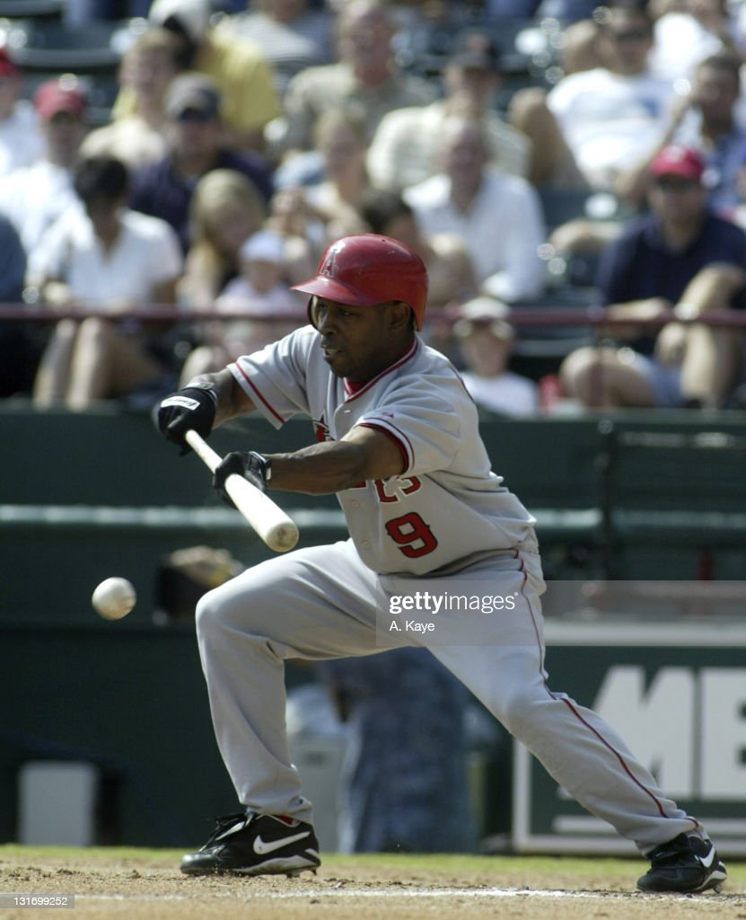 Angels 2nd baseman Chone Figgins attempts to bunt his way on early in the ballgame but fails as bunt rolls foul. Texas Rangers 6, Anaheim Angels 3. Ameriquest Stadium, Arlington, Texas on September 30, 2004.