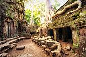 Angkor Wat Cambodia. Ta Prohm Khmer temple