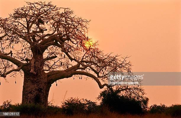 Angola, Bengo Province, Kissama National Park, le coucher du soleil.