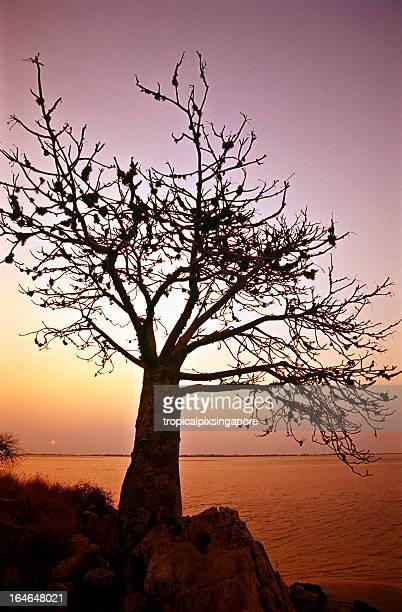Angola, Bengoangola_provinces.kgm Província Mussulo Bay, pôr do sol.