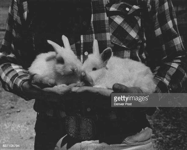 Angora bunnies these are held by Charles Herrmann will produce about five ounces of fine fur each when they're six weeks old Charles and Harold...