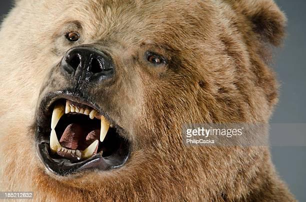 Angry Bear cara