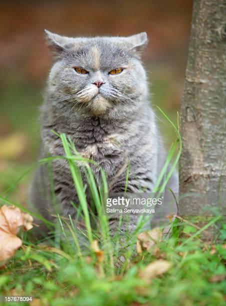 Angry Gato