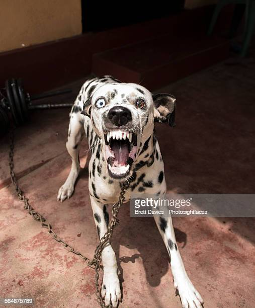 angry dog - dog cruelty stock pictures, royalty-free photos & images