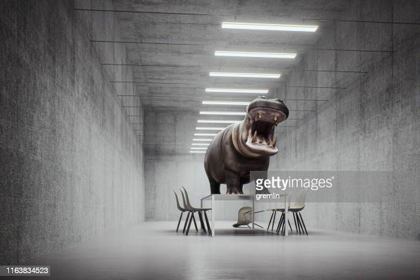 angry hippo in the office - bossy stock pictures, royalty-free photos & images