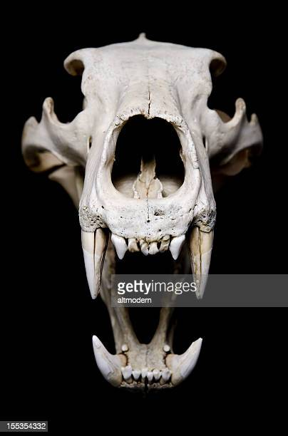 angry - human skull stock pictures, royalty-free photos & images