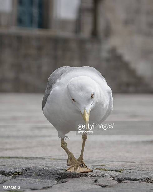 angry seagull - lifeispixels stock pictures, royalty-free photos & images