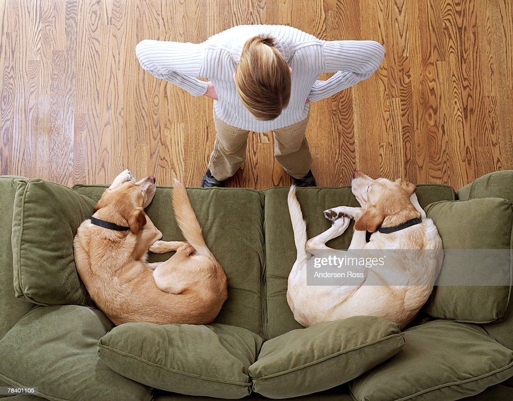 Angry woman with sleeping dogs on sofa : Stock Photo