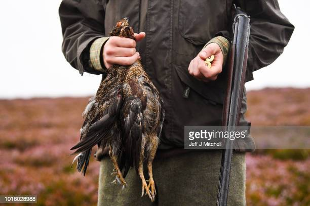 Angus Turnbull holds a brace of grouse he bagged on first day of the grouse shooting season on Forneth Moor on August 13, 2018 in Dunkeld, Scotland....