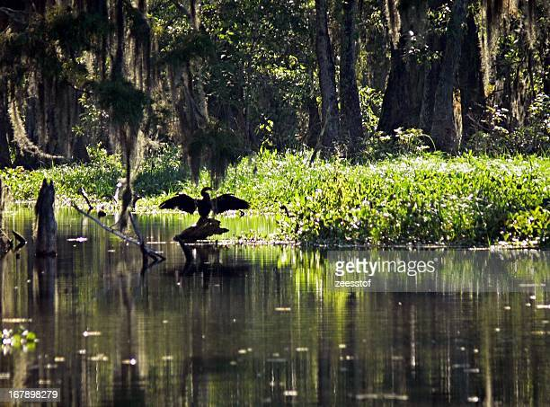 anhinga - zeesstof stock pictures, royalty-free photos & images
