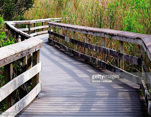 anhinga trail boardwalk in florida - anhinga_trail stock pictures, royalty-free photos & images