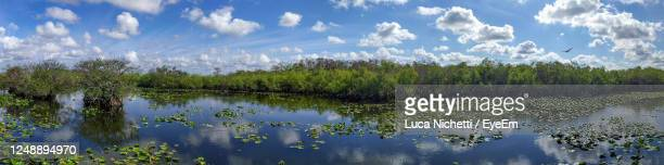 anhinga trail wide landscape, everglades national park, florida - anhinga_trail stock pictures, royalty-free photos & images