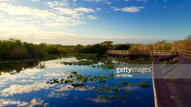 anhingatrailboardwalk - anhinga_trail stock pictures, royalty-free photos & images