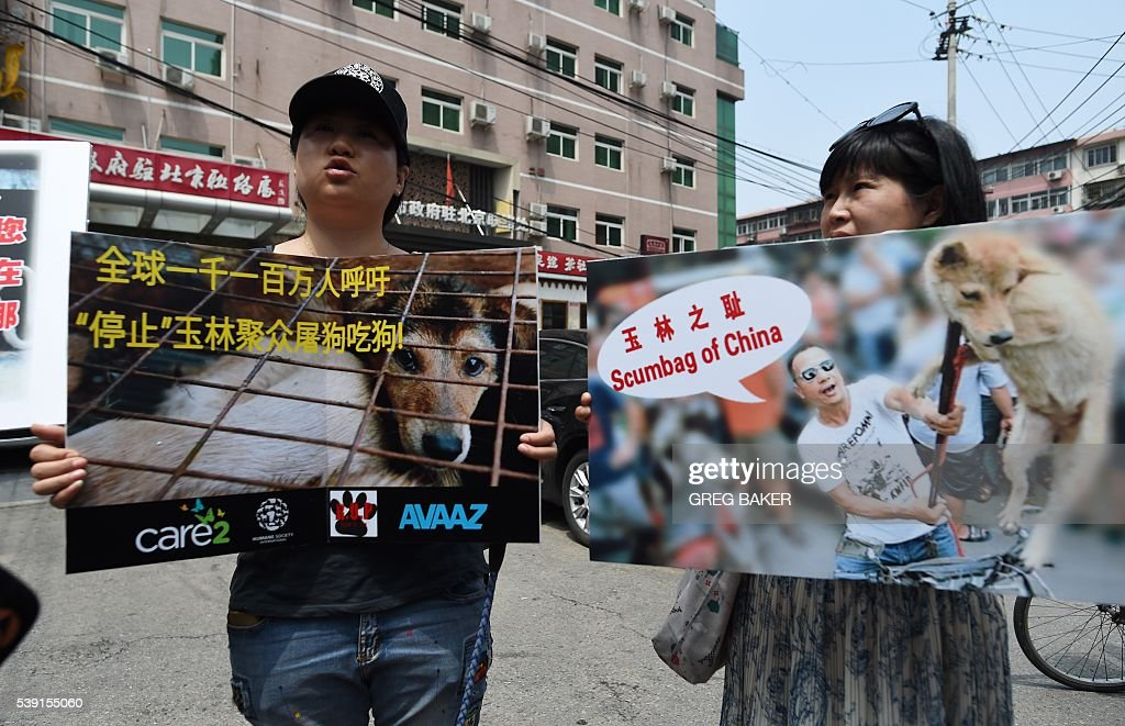 Animal activists display protest banners outside the Yulin government office in Beijing on June 10, 2016. A group of Chinese and international animal activists presented a petition signed by 11 million people calling on authorities to end the annual Yulin dog meat festival. The activists claim thousands of dogs, many of the them stolen from pet owners, are slaughtered each year for the festival, which begins in the southern city of Yulin on June 21. / AFP / GREG