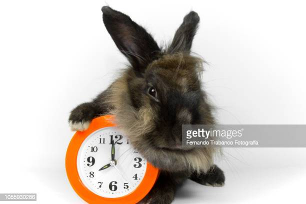 animal and watch - countdown clock stock-fotos und bilder
