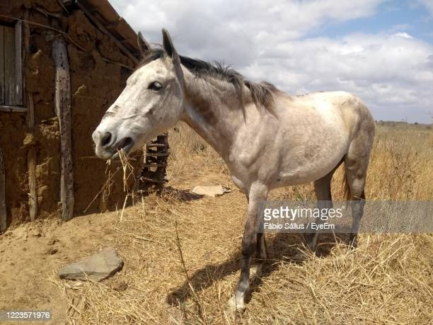 animal, casa, fazenda ,seca, cavalo , selvagem, - animal selvagem stock pictures, royalty-free photos & images