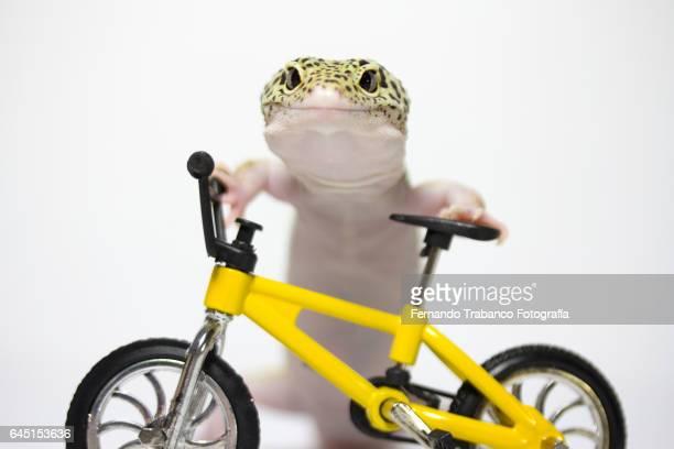 Animal climbing on a yellow bicycle