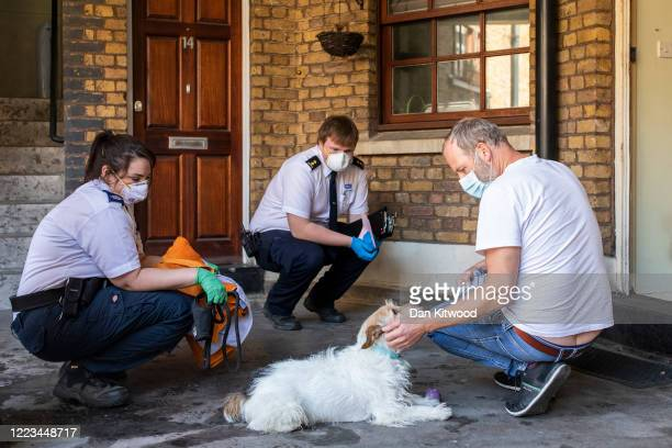 Animal Collection Officer Kirstie Gillard and colleague James arrive to collect a Terrier named named Jeff whose owner had died the previous day on...