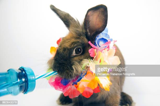 Animal drinking from a straw