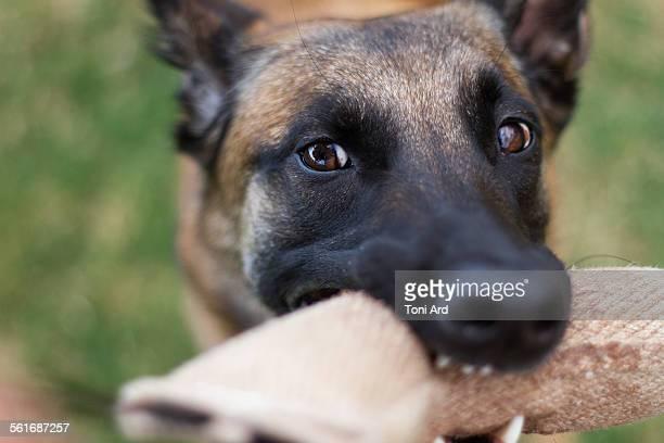 Animal Eye Contact