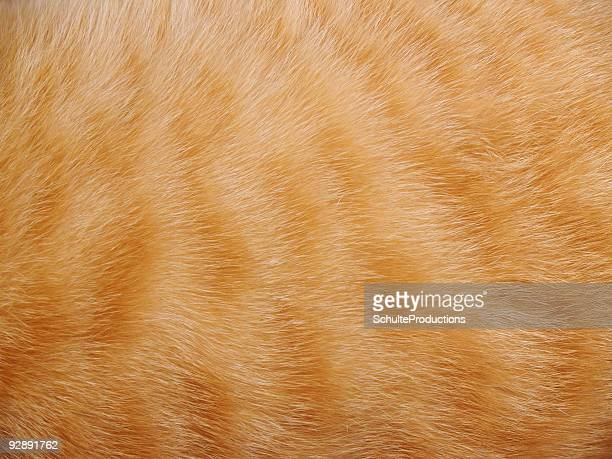 Animal Fur Background