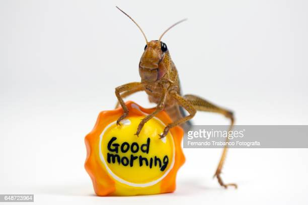 animal greets good morning in the morning sunny - cockroach stock photos and pictures