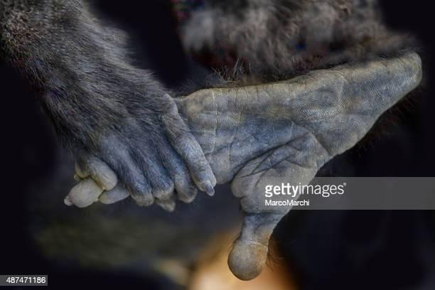 Tierische Hand