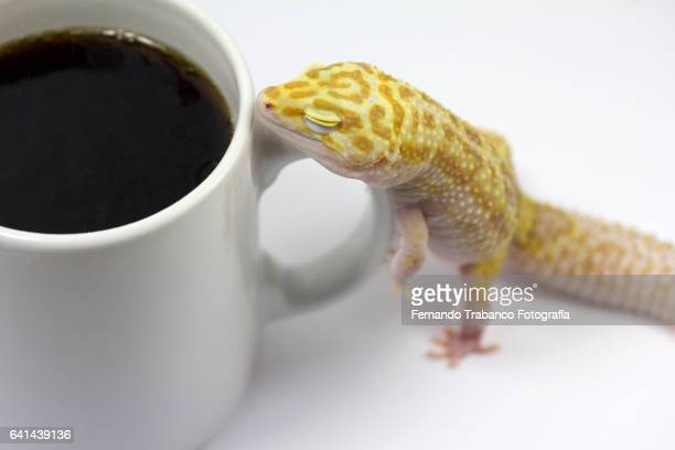 Animal having breakfast a cup of coffee