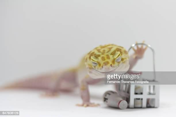 Animal holding a cart full of milk bottles