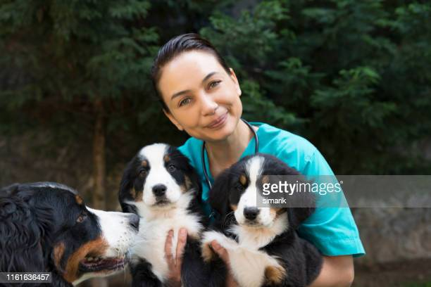 animal hospital - animal body part stock pictures, royalty-free photos & images