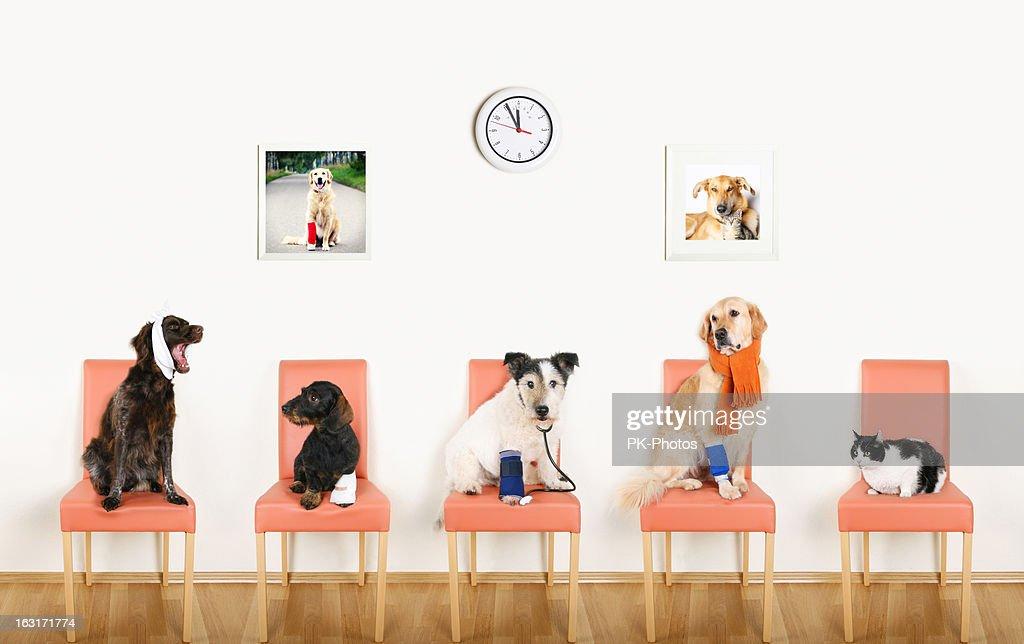 Animal Hospital : Stockfoto