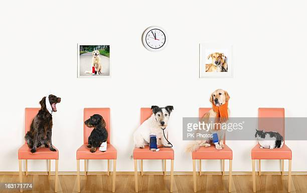 animal hospital - dog and cat stock photos and pictures
