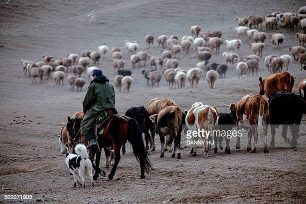 Animal Husbandry Transferring in Altay Area